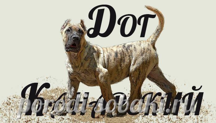 Собака канарский дог